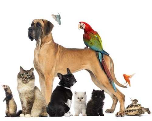 Dogs, Cats and Exotic Animals Lined Up