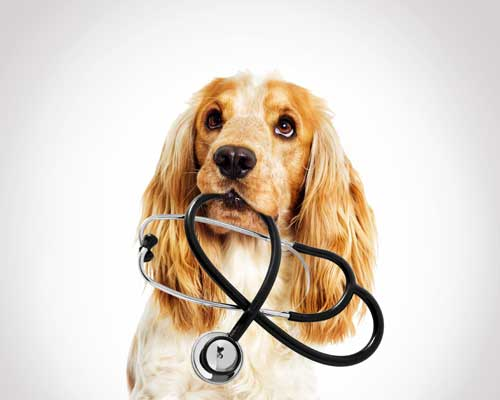 Dog Holding Stethoscope in Mouth